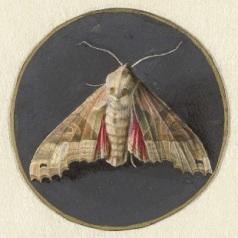 028 RP-T-1884-A-330B Uiltje of nachtvlinder, Jan Augustin van der Goes, 1690 - 1700