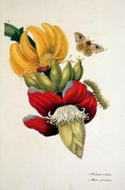042 tumblr_mfp9cajK141rrzeubo1_1280 banaan met metamorfose vlinder blz. 187