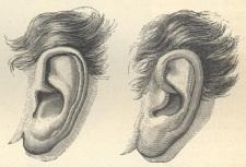 004 oor Mozart links