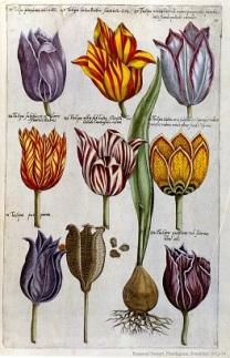 007 florilegium