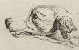 RP-P-1878-A-1288 Kop van een hond, D. Merrem, naar Frans Snijders, 1700 - 1800