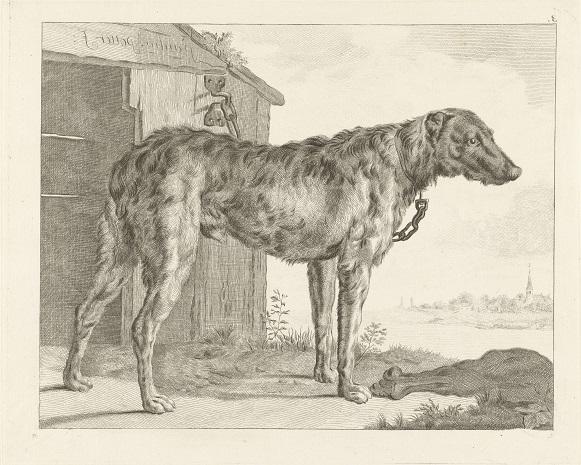 RP-P-OB-22.909 Hond, Pieter de Mare, naar Abraham Delfos, naar Paulus Potter