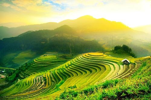 Bali-Rijstvelden