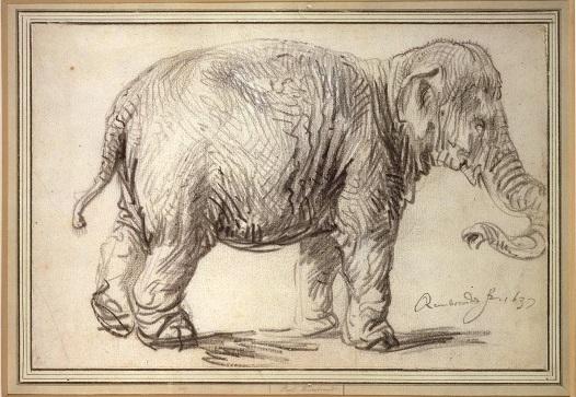 019 b Rembrandt-Elephant-Vienna-Illustration-7 Wenen Albertina, 1637