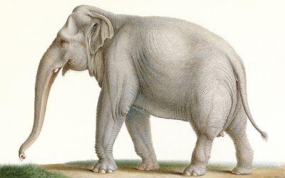 005 Nicolas_Huet04 le Jeune olifant Willem V gestolen door Fransen in 1795